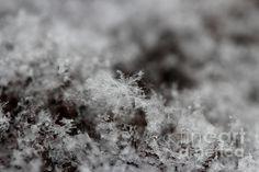 Macro photography of snowflakes.