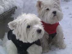 How to Keep Dogs Warm in the Winter: Use canine clothing options for particular dogs and situations.