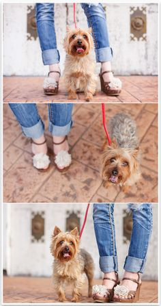 For the Love of Shoes & Dogs by Missy Moo Photography