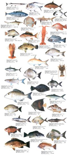 see fishes - Google Search
