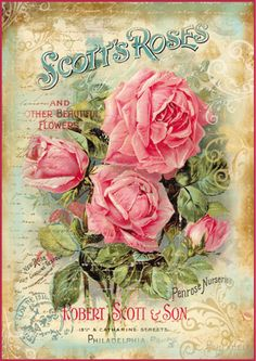 Digital Vintage Image- Scott's Roses