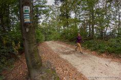 Marked trails in the Carpathian Foothills.  www.simplycarpathians.com