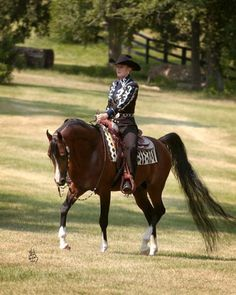 Arabian Western Pleasure. No offence AQHA but this is much more majestic.