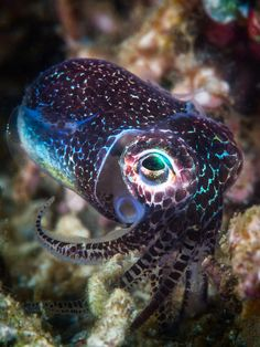 vurtual: Baby cuttlefish (by Gaby Barathieu) - take action Underwater Creatures, Underwater Life, Ocean Creatures, Fishing Photography, Animal Photography, Kraken, Cuttlefish, Life Aquatic, Sea Fishing