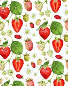 strawberry pattern play; art by kendyll hillegas