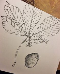 persuasive essay nature vs nurture