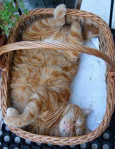 Garden kitty ...