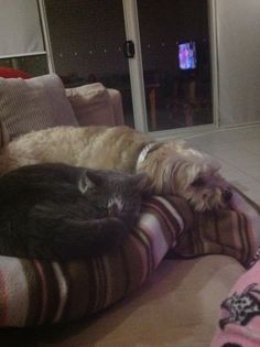 Dexter & Nala. Best friends forever.!