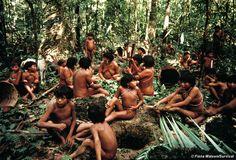 Yanomami of Demini prepare timbó poison from a vine, used to stun fish, Brazil. © Fiona Watson/Survival