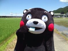 Kumamon eats a Popsicle on a warm summer day.