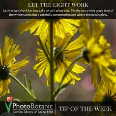 #Photography #TipOfTheWeek Let the Light Work | http://photobotanic.com/let-the-light-work