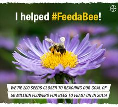 I just helped #FeedABee & you can too! Visit www.FeedABee.com to learn how you can help grow 50 million #flowers for  #bees in 2015.