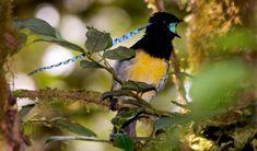 paradise bird - Buscar con Google
