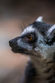 Featured photo by Egor Kamelev. More work by Egor on Pexels at https://www.pexels.com/u/ekamelev/ #animal #pet #cute