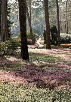 Heidetuin (heather garden) - Driebergen, The Netherlands Heather Gardens, Rotterdam Netherlands, Utrecht, Google Images, Landscape Photography, Amsterdam, Dutch, Film, Environment