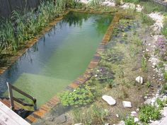 Best trending natural swimming pool with natural fresh cleanwater filter system Swimming Pool Pond, Natural Swimming Ponds, Natural Pond, Swimming Pool Designs, Piscine Diy, Pool Water Features, Pond Design, Fish Ponds, Dream Pools