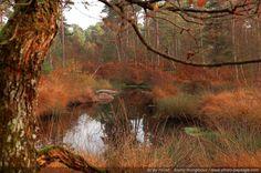 Point d'eau - Mare aux Pigeons Gorges de Franchard, Forêt de fontainebleau