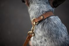hollows leather | dog collar and leash (photo by simplethreads) (via http://pinterest.com/pin/287104544966917990/)