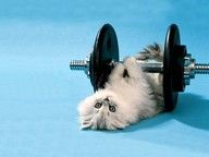 """Kitty """"lifting"""" weights"""