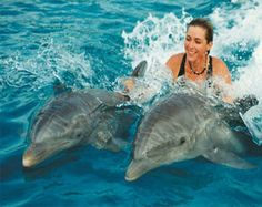 Really Great Resource of 6 Things You Must Try on Caribbean Holidays. Know More about 6 Things You Must Try on Caribbean Holidays here Mayan Riviera Mexico, Cozumel Mexico, Kairo, Especie Animal, Images Google, Nature Adventure, Adventure Awaits, Hawaii Vacation, Girls Vacation