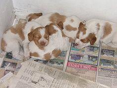 Prevent Abuse with Mandatory Dog Breeder Registry http://forcechange.com/127433/prevent-abuse-with-mandatory-dog-breeder-registry/