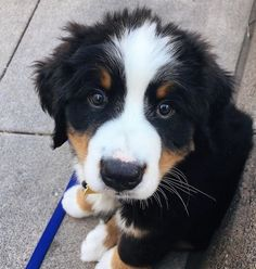 We thought we would together Cute puppies that you will love to just brighten up your day! Cute Funny Dogs, Cute Funny Animals, Cute Cats, Funny Cats, Pet Shop, Cute Puppy Pictures, Cute Little Animals, Baby Dogs, Dog Photos