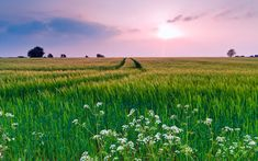 Картинка облака, цветы, Природа, поле, небо, вечер, трава, лето