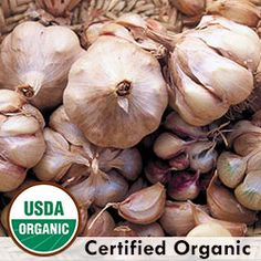 Garlic, Broadleaf Czech Organic | Seed Savers Exchange Softneck Ships 9/28/2015