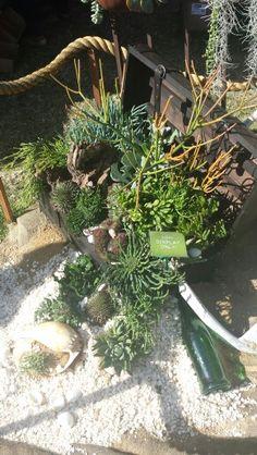 'Tresure Chest' Fickle prickles display from Perth Garden Festival 2015 Perth, Planting, Display, Garden, Ideas, Floor Space, Plants, Garten, Billboard