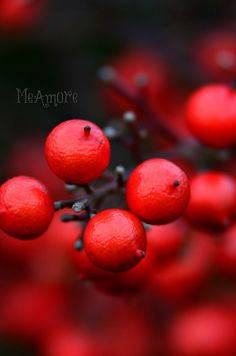 RED by MeAmore5, via Flickr