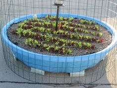 How to turn a plastic kiddie pool into a raised bed garden for Plastic swimming pool garden
