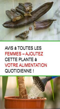 Avis à toutes les femmes – Ajoutez cette plante à votre alimentation quotidienne ! #Plante #Aliment #Femme #Femmes #Femme #Femmes Nutrition, Vegetables, Food, Women, Shrub, Teeth, Plants, Recipe, Essen