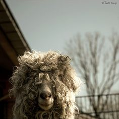 You think that you are having a bad hair day?...well let me tell you....