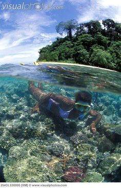 Kimbe Bay in West New Britain has more than 50% of the world's coral species - making snorkeling & diving there world class!