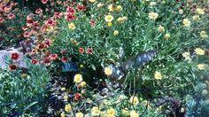 Rabbit #SpringsPreserve