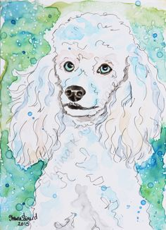 CUSTOM PAINTINGS / MIXED MEDIA ON YUPO PAPER / PET PORTRAITS / RESCUED PETS / DOGS / Poodle by Shaina Kay Stinard - Artist.  www.shainastinard@yahoo.com   Making your photos a work of art!  'Lizette' - 5 x 7 watercolor with pen and ink on YUPO paper.  #SecondChances #artbook #Kickstarter