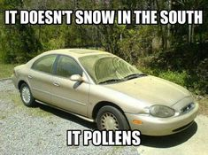 Pollen in the South Southern Humor, Southern Pride, Southern Charm, Southern Style, Southern Girl Sayings, Southern Living, Funny Southern Quotes, Southern Phrases, Southern Heritage