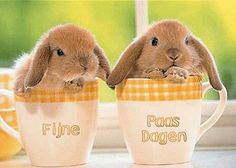 Below are a few cute pet rabbit photos. I am a big fan of these furry animals, they are just so cute and cuddling. If you have fun bunny photos that you would Lop Bunnies, Baby Bunnies, Cute Bunny, Adorable Bunnies, Easter Bunny, Bunny Bunny, Easter Card, Funny Bunnies, Easter Eggs