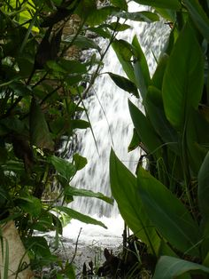 Cascada en el Parque del Río Neusa, Cundinamarca.