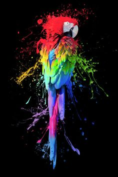 This art shows the variety and brightness of colours through a parrot which is renowned for it's rainbow-like feathers. World Of Color, Color Of Life, Rainbow Art, Rainbow Colors, Rainbow Stuff, Neon Rainbow, Urbane Kunst, Arte Pop, Bird Art