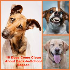 10 Dogs Come Clean About Back-to-School Season