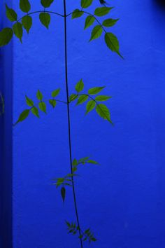 Starting point colour for headboard? Majorelle blue from the heavenly Jardin Majorelle in Marrakesh.