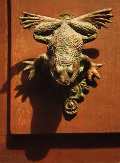 Frog Knockdr