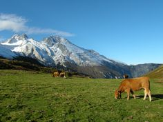 Picos de Europa | Flickr - Photo Sharing!
