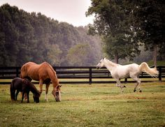 Love country living and the outdoors? Milton Georgia may be perfect for you. A beautiful community in the North Fulton, Atlanta area. Country Life, Country Living, Country Roads, Farm Photography, Animal Photography, Farm Day, Pet Chickens, Old Farm, Horse Farms