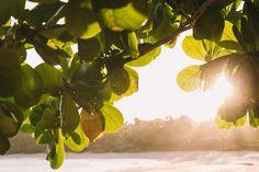 Localizada na Vila do Outeiro, está a 5min de 3 praias: Espelho, Amores e Outeiro. Possui 7 suítes amplas, claras e arejadas, ar condicionado, TV, internet e fr #pousada #Brisasdoespelho #praia #caraíva