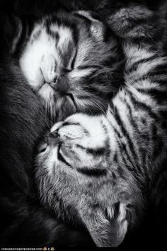 extra cuteness in black and white...