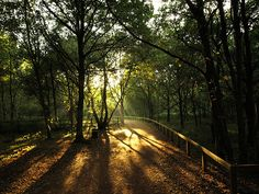 sherwood forest england - Google Search