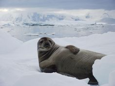 Chilling out in Antarctica Kim Christie of Hackbridge, Surrey