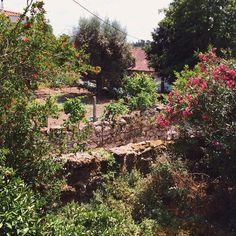 """Summer view to Fiais da Beira from our """"Blossom"""" Room  #summer #blossomsuite #stroganovhotel #fiaisdabeira #portugaldenorteasul #vsco"""